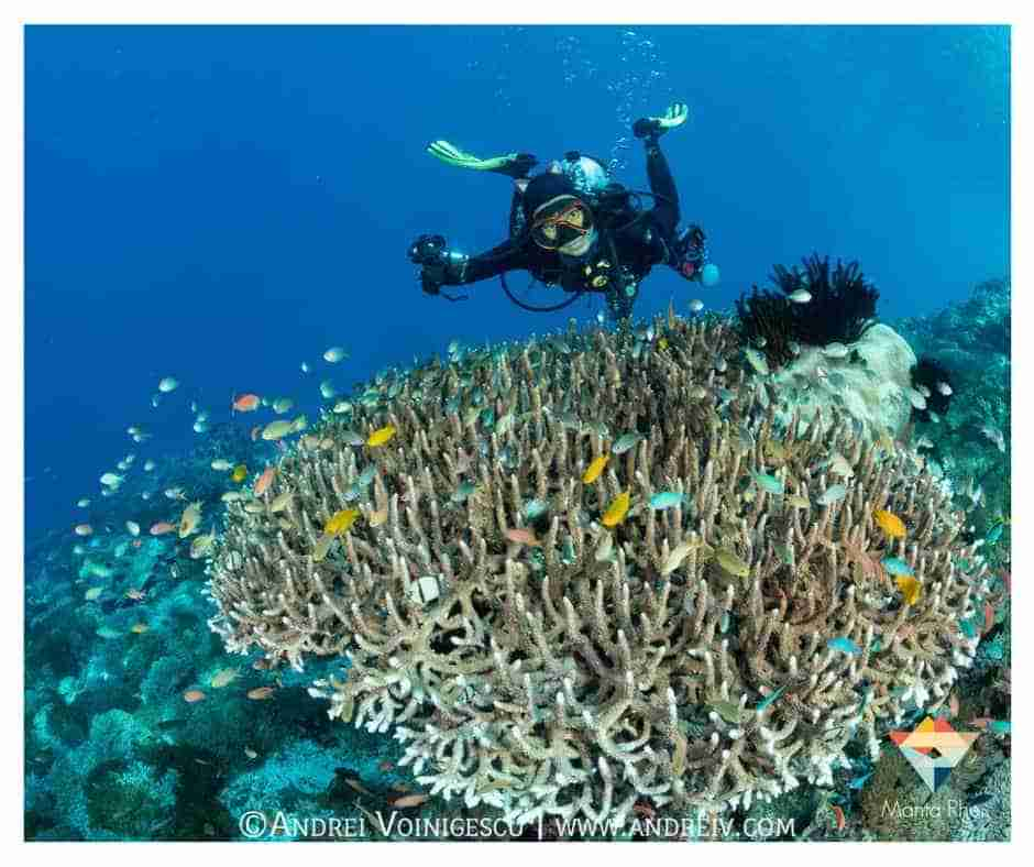Staghorn Coral and Diver